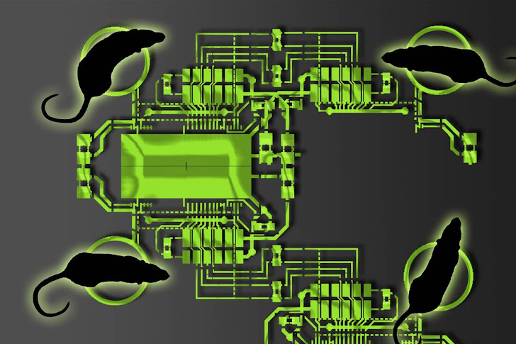 This Organic Computer is Made up from Brains of Rats and Monkeys
