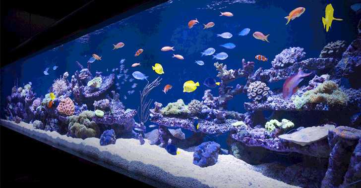 Casino Gets Hacked Through Its Internet-Connected Fish Tank Thermometer